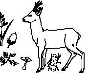 Coloriage dessin  Chevreuil 2