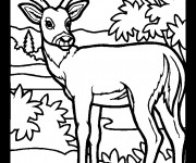 Coloriage dessin  Chevreuil 6