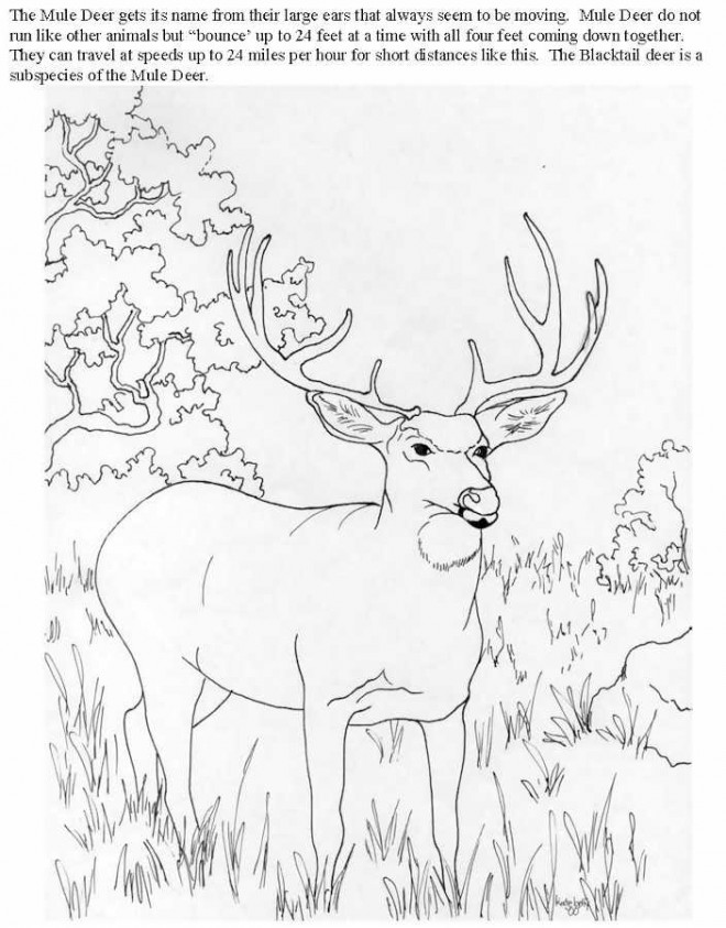 Coloriage et dessins gratuits Chevreuil adulte dans la forêt à imprimer