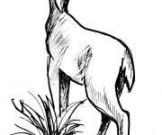 Coloriage et dessins gratuit Chevreuil au crayon à imprimer