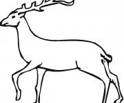 Coloriage et dessins gratuit Chevreuil avec grosses cornes à imprimer