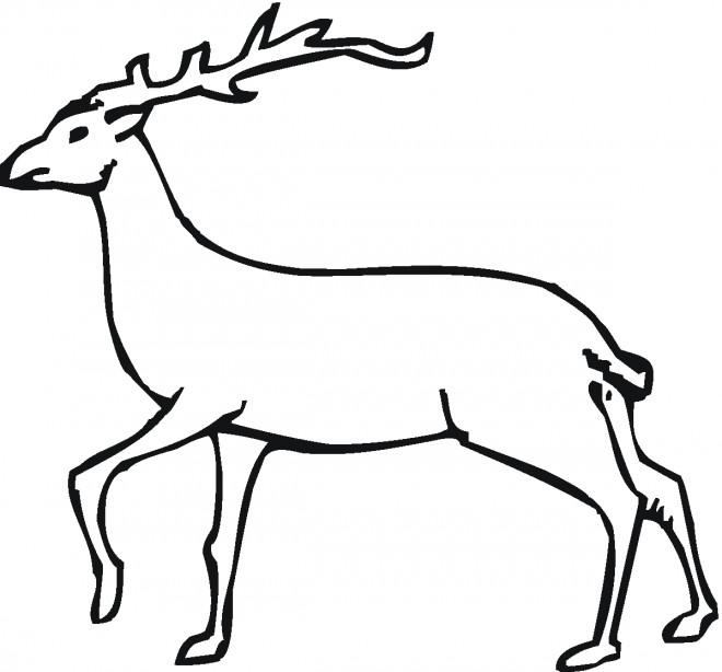 Coloriage et dessins gratuits Chevreuil avec grosses cornes à imprimer
