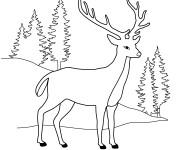 Coloriage et dessins gratuit Chevreuil dans la forêt à imprimer