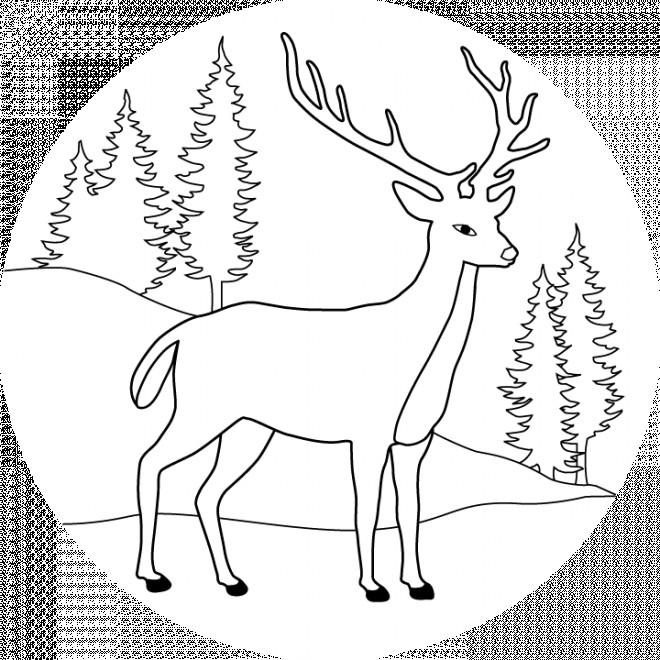 Coloriage et dessins gratuits Chevreuil dans la forêt à imprimer