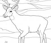 Coloriage Chevreuil dans la plaine portrait