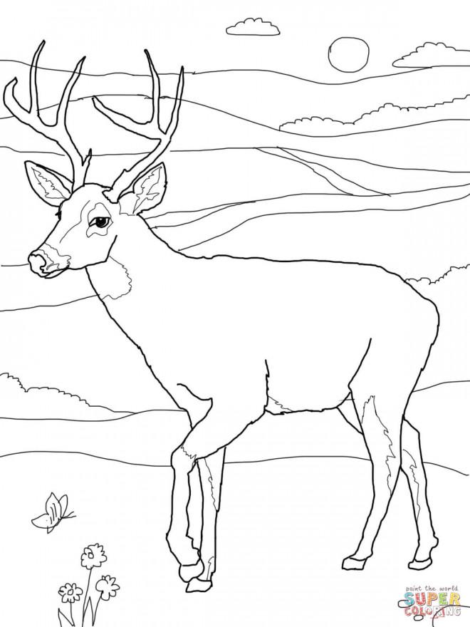 Coloriage et dessins gratuits Chevreuil dans la plaine portrait à imprimer