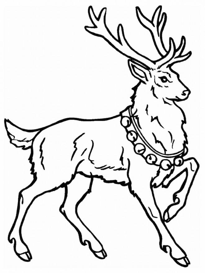 Coloriage et dessins gratuits Chevreuil de Noël à imprimer