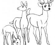 Coloriage et dessins gratuit Chevreuil en famille à imprimer