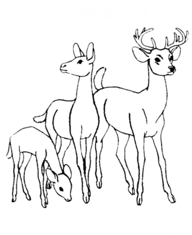 Coloriage et dessins gratuits Chevreuil en famille à imprimer