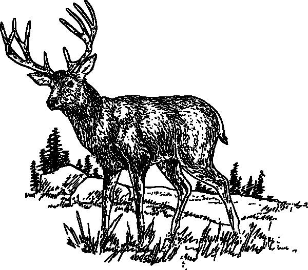 Coloriage et dessins gratuits Chevreuil en noir à imprimer