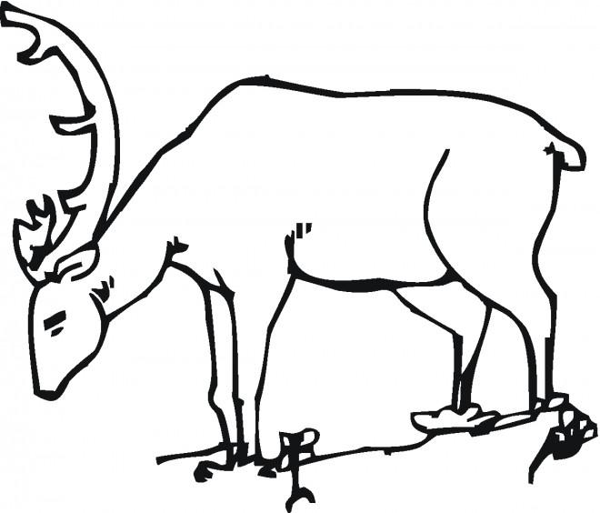 Coloriage et dessins gratuits Chevreuil en train de manger à imprimer
