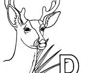 Coloriage Chevreuil et la lettre D