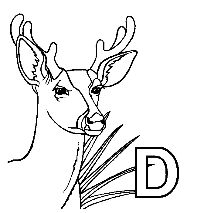 Coloriage et dessins gratuits Chevreuil et la lettre D à imprimer