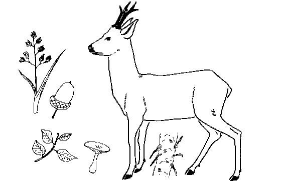 Coloriage chevreuil et nourriture dessin gratuit imprimer - Dessiner un cerf ...
