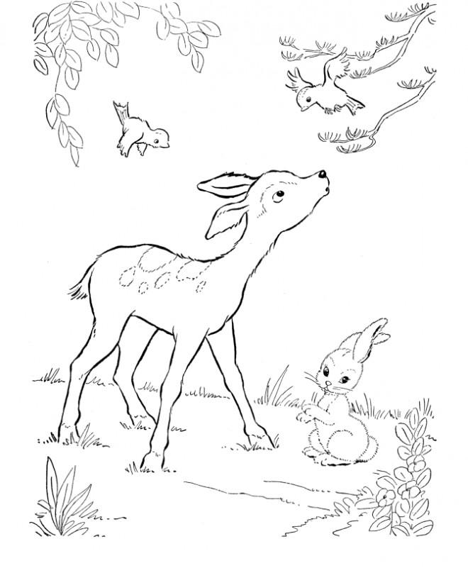 Coloriage et dessins gratuits Chevreuil et oiseaux à imprimer