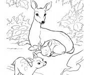 Coloriage et dessins gratuit Chevreuil et ses petits à imprimer
