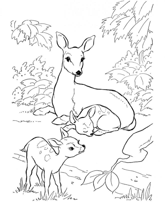 Coloriage Chevreuil et ses petits