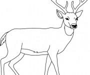 Coloriage et dessins gratuit Chevreuil facile à imprimer