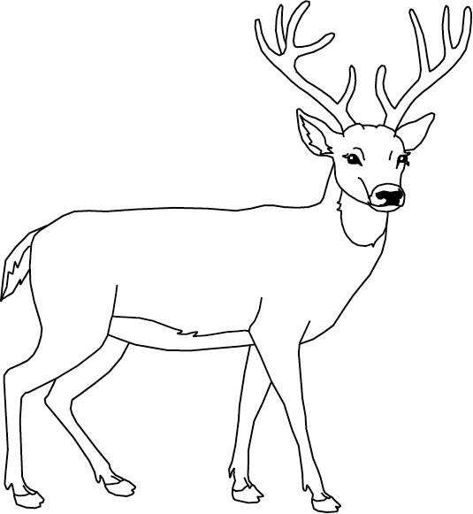 Coloriage et dessins gratuits Chevreuil facile à imprimer