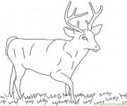 Coloriage et dessins gratuit Chevreuil mâle à imprimer