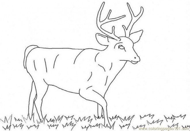 Coloriage et dessins gratuits Chevreuil mâle à imprimer
