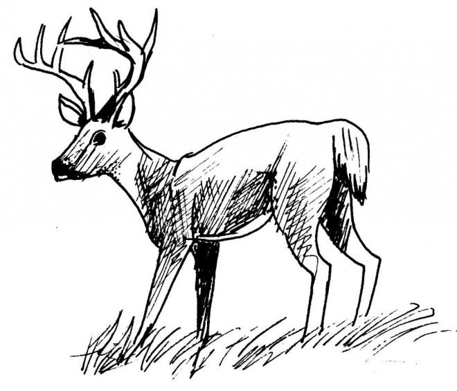 Coloriage et dessins gratuits Chevreuil mâle en noir à imprimer