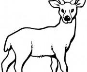 Coloriage et dessins gratuit Chevreuil portrait à imprimer