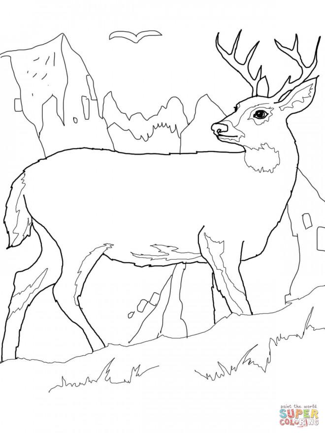 Coloriage et dessins gratuits Chevreuil stylisé à imprimer