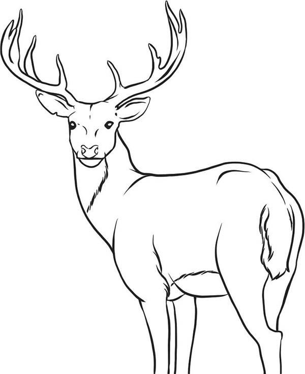 Coloriage Chevreuil te regarde dessin gratuit à imprimer