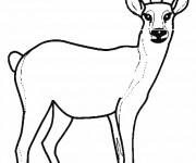 Coloriage et dessins gratuit Chevreuil vecteur à imprimer