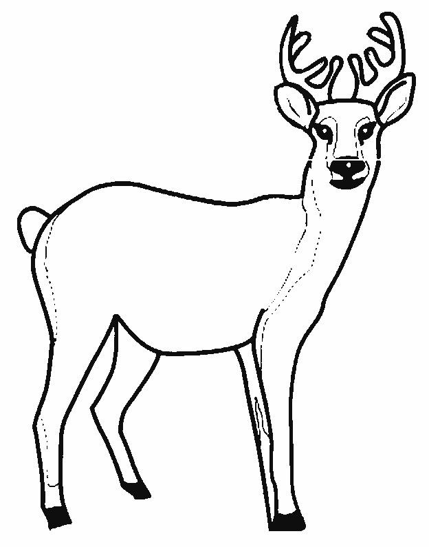 Coloriage et dessins gratuits Chevreuil vecteur à imprimer