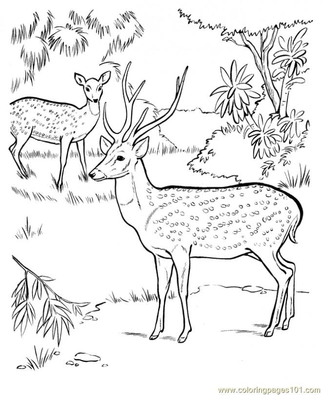 Coloriage Chevreuils dans au parc dessin gratuit imprimer