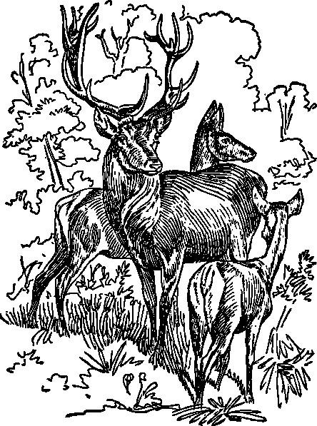 Coloriage et dessins gratuits Chevreuils dessiné en noir à imprimer