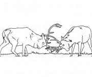 Coloriage Chevreuils  se combattent