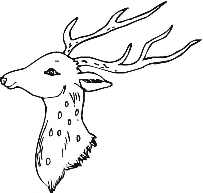 Coloriage et dessins gratuits La Tête de jeune Chevreuil à imprimer