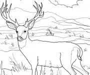 Coloriage Paysage de Chevreuil dans la nature