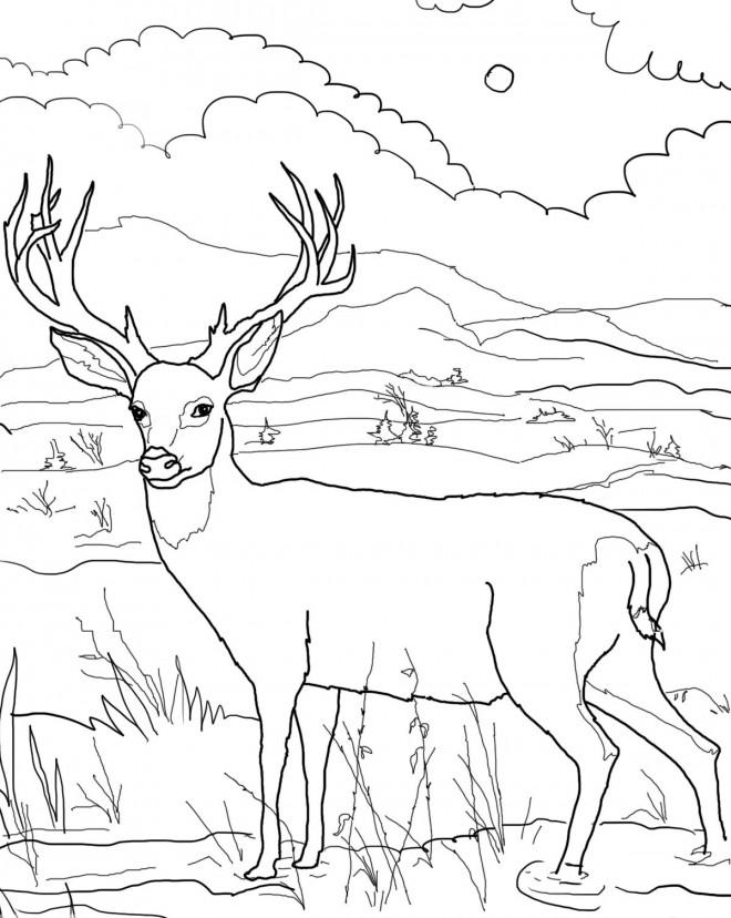 Coloriage et dessins gratuits Paysage de Chevreuil dans la nature à imprimer