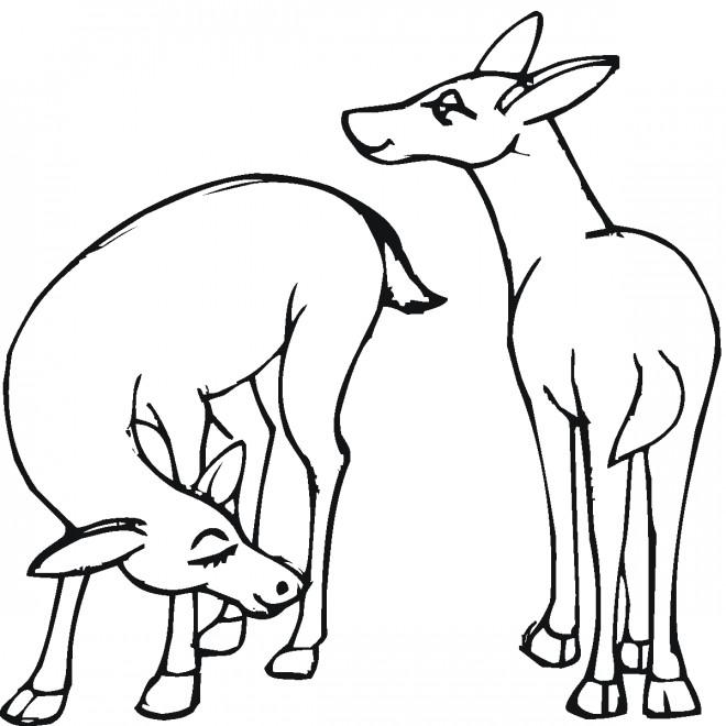 Coloriage et dessins gratuits Petits Chevreuils dessin à imprimer