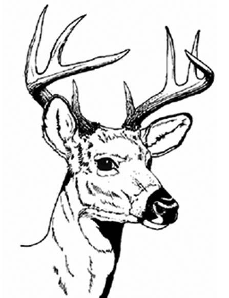 Coloriage et dessins gratuits Tête Chevreuil à imprimer