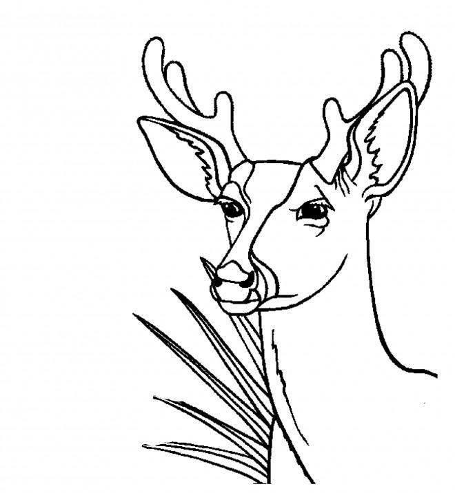Coloriage et dessins gratuits Tête de Chevreuil asiatique à imprimer