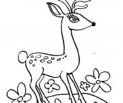 Coloriage Un Chevreuil avec des beaux yeux