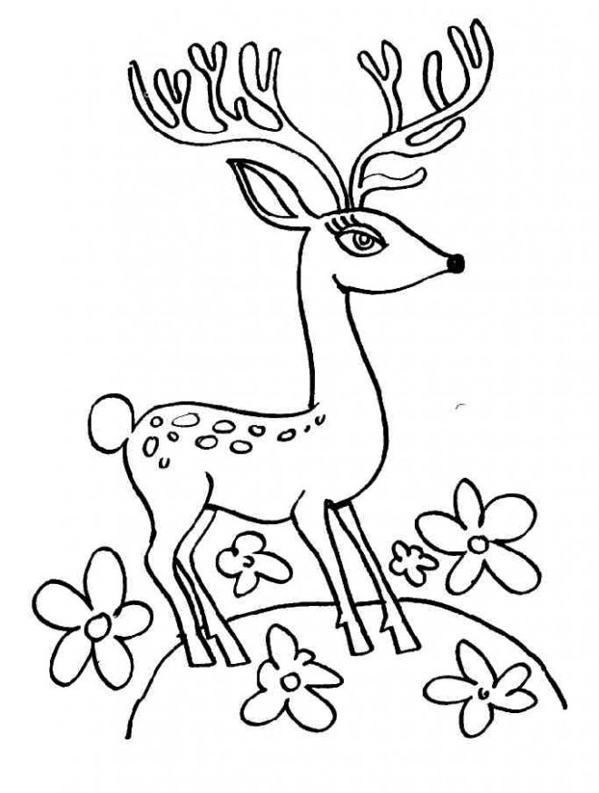 Coloriage et dessins gratuits Un Chevreuil avec des beaux yeux à imprimer