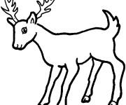 Coloriage et dessins gratuit Un petit Chevreuil à imprimer