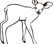 Coloriage et dessins gratuit Un petit Chevreuil facile à imprimer