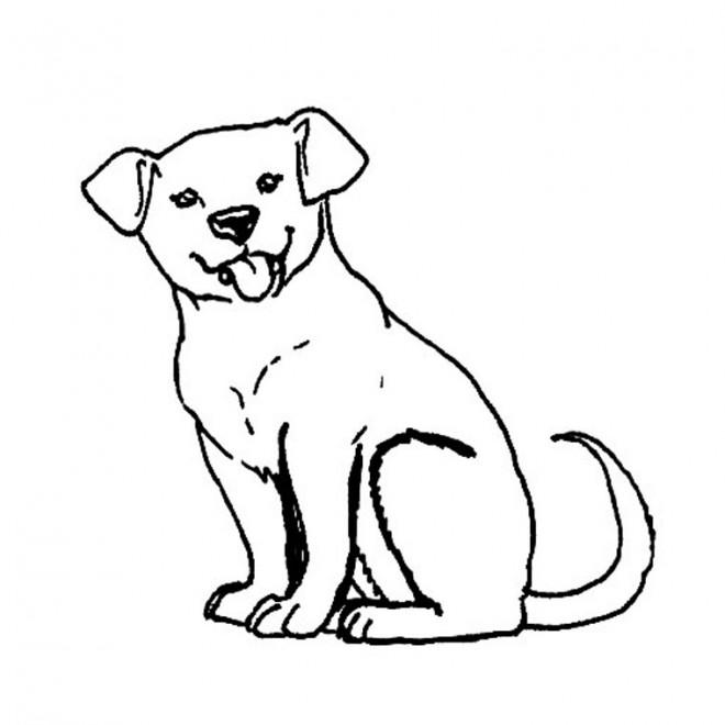 Coloriage chien colorier dessin gratuit imprimer - Coloriage labrador ...