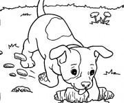 Coloriage chien dans le jardin dessin gratuit imprimer for Dessiner son jardin gratuit en ligne