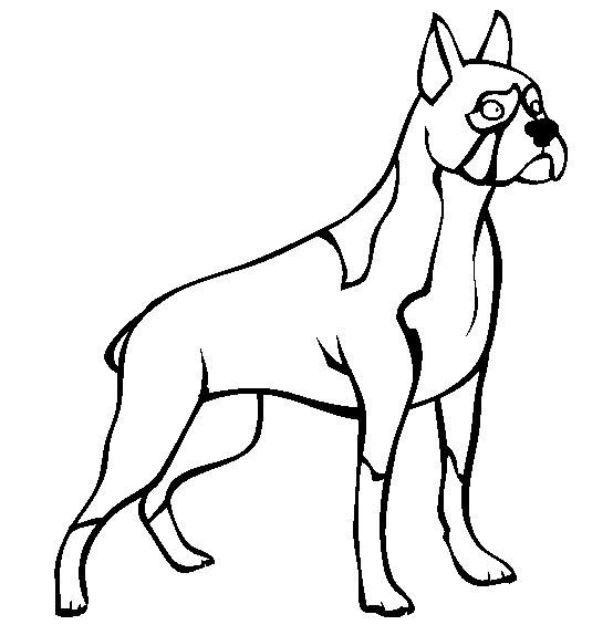 Coloriage chien de race dessin gratuit imprimer - Boxer chien dessin ...