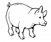Coloriage Cochon maternelle