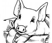 Coloriage et dessins gratuit Cochon trop mignon à imprimer