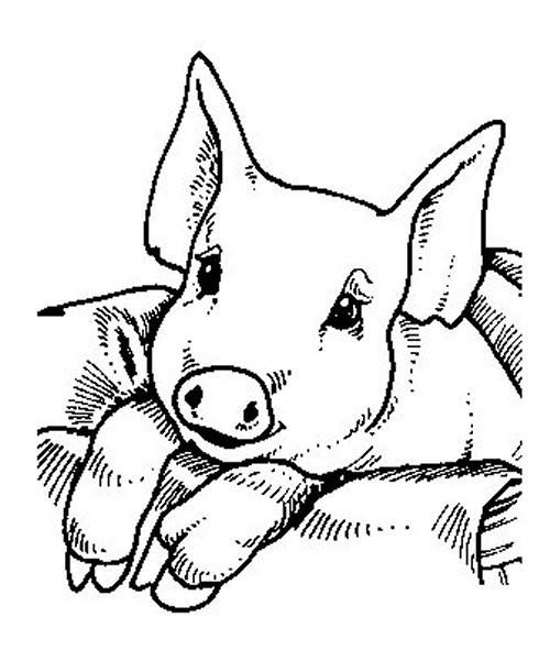 Coloriage et dessins gratuits Cochon trop mignon à imprimer